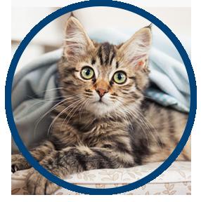 Low Cost Spay/Neuter & Pet Wellness Clinic in East TX   Dehart